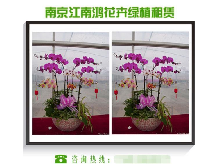 乐虎国际娱乐登陆平台选择南京花卉租摆及更换绿植租赁的方式
